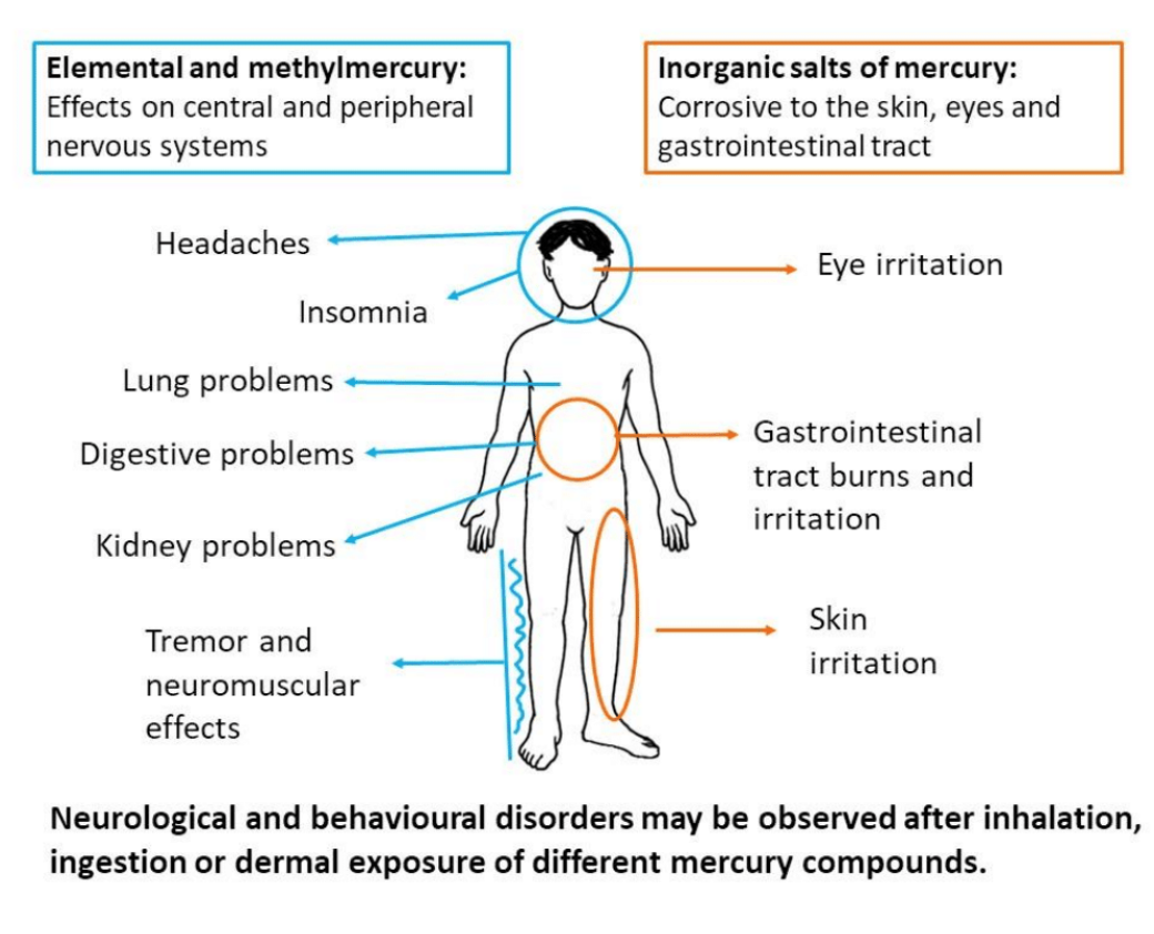 effects of mercury in english